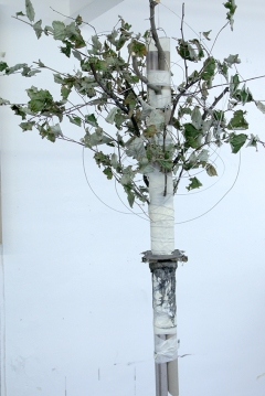 Study of Harrison's Parrot. 2014. card, branches, leaves, tape, wire. Dimensions variable.