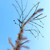 Study of Harrison's Parrot. 2014. feathers and tree. Dimensions variable.
