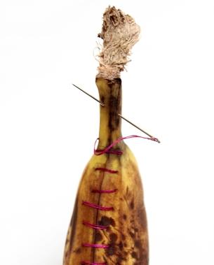 Study of Harrison's banana. 2014. banana, needle and thread. Dimensions variable.